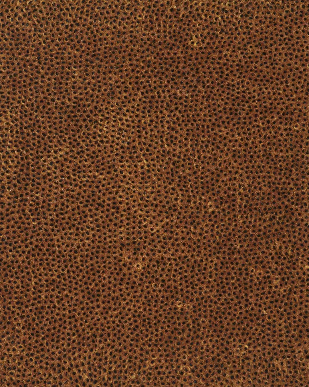 Close up view of textured Coral Cut Pile rug in brown colour